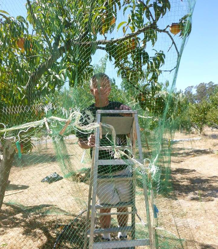 Rich Netting the Peaches